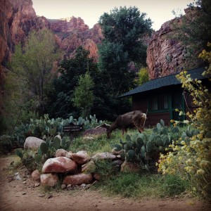 Wildlife at Phantom Ranch