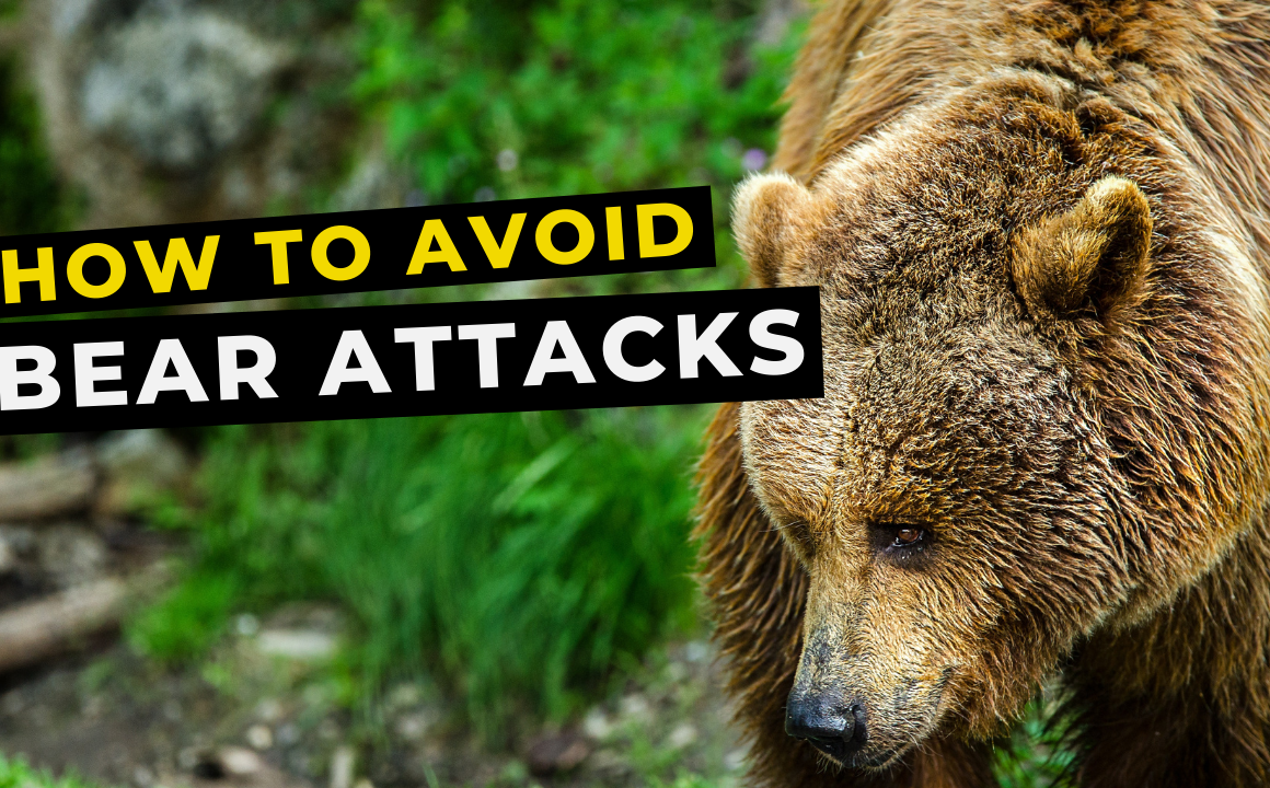 What to do if a bear attacks