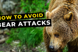 Bear Safety for Trail Runners [VIDEO]